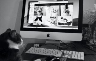Image of cat using a computer at home, humorous image to depict Smart Working